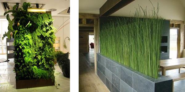Перегородки из живых растений при зонировании фото дизайн